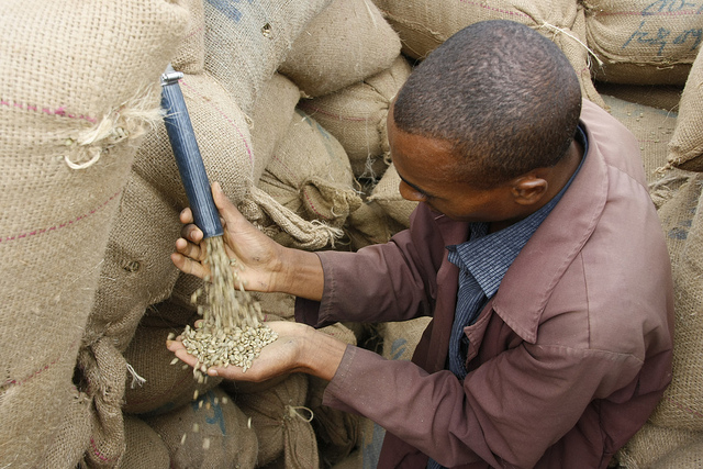 Ethiopia coffee warehouse with bags of green coffee beans