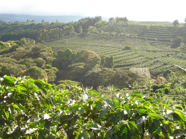 Starbucks buys Costa Rican coffee farm