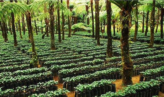 rainforest alliance certified coffees up 45 percent in 2012