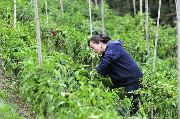climate science and coffee farming