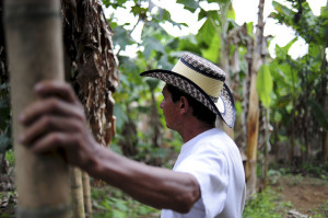 smallholder coffee farms should diversify with leaf rust crisis