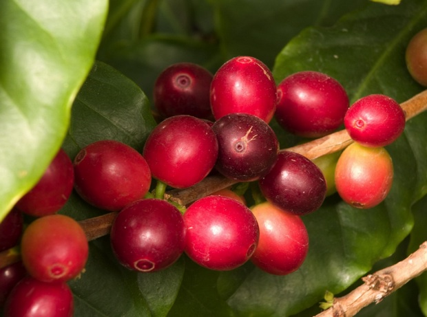 biodiversity in Costa Rican coffee farm