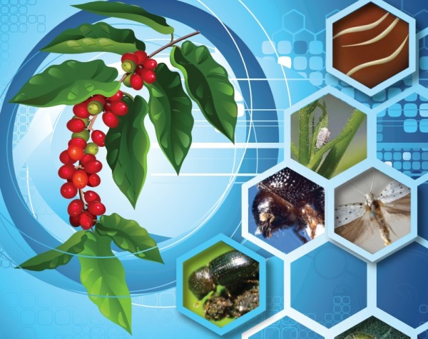 coffee pests and diseases