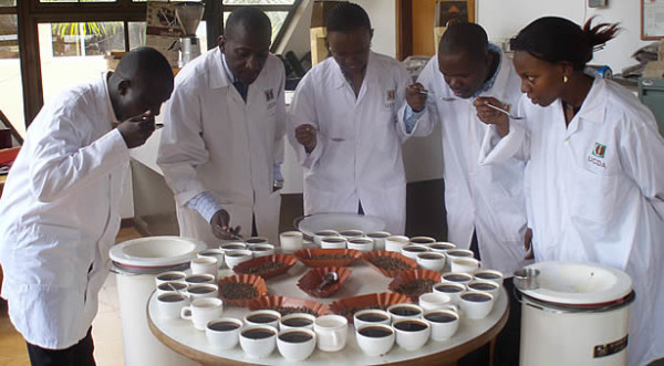 A Huge Step Forward for Fine Robusta. Is the Specialty Coffee Market Ready?
