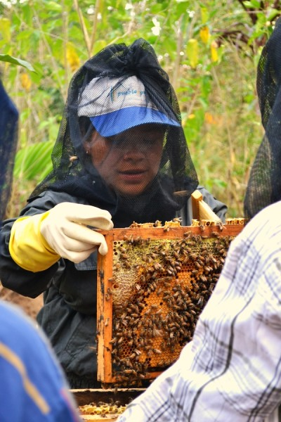 How Beekeeping is Helping Farmers Cope with La Roya in the Guatemalan Coffeelands