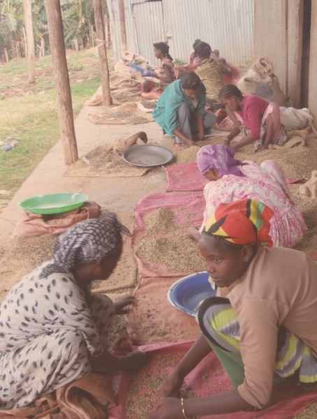 Six Lenses on Gender in Specialty Coffee Production