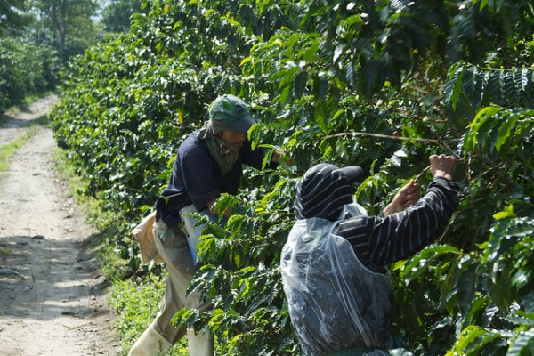 Colombian Coffee Commission Publishes Final Recommendations for Industry Reforms