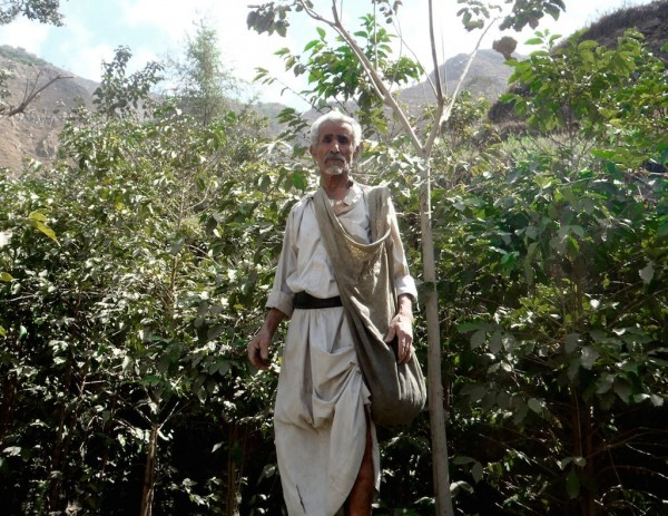 A Yemeni Coffee farmer. Photo by Andrew Nicholson.