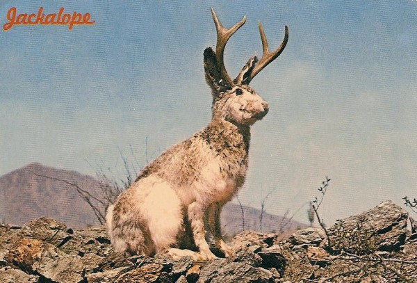 The Jackalope. A north American mythological creature that is a hybrid