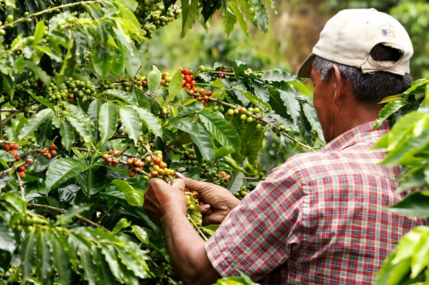 Specialty Coffee's Place on the 'New Global Food Frontier'