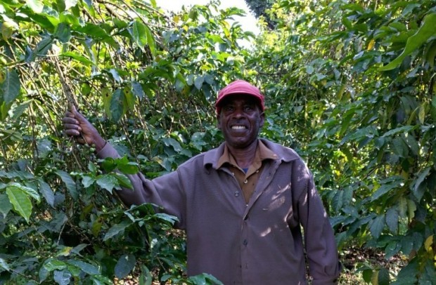 As Coffee Farms Shrink, Smallholders will Require More than Just Market Incentives