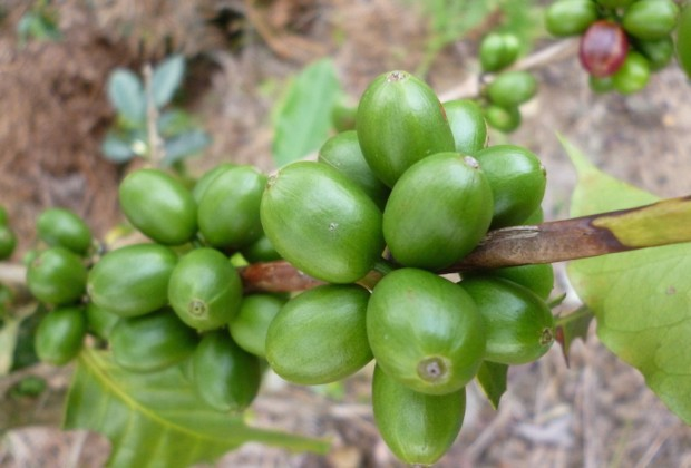 Q&A With Study Author on Coffee Certification and Specialization