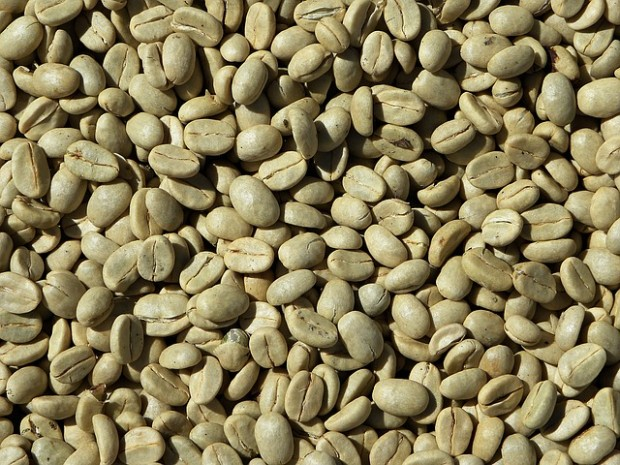 Coffee Prices Slump Yet Again, Reaching 21-Month Low at $1.131/lb