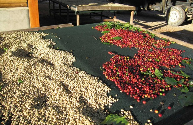 Little Costa Rica's Huge Plans to Become Coffee-Carbon-Neutral