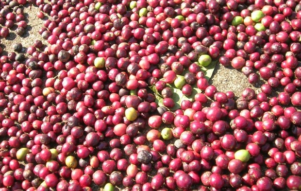 Why Naturals Should Play a Big Role in the Future of Specialty Coffee