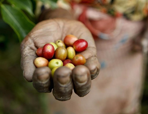 The Sustainable Coffee Challenge Roadmap: What is It?