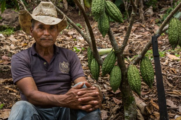 As Climate Changes Coffee, Cocoa's Case as a Farm Alternative
