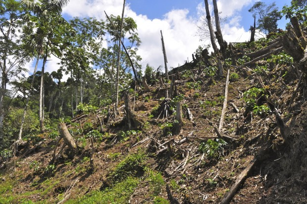 Deforestation for coffee. San Martin, Peru. © Conservation International/photo by Bailey Evans