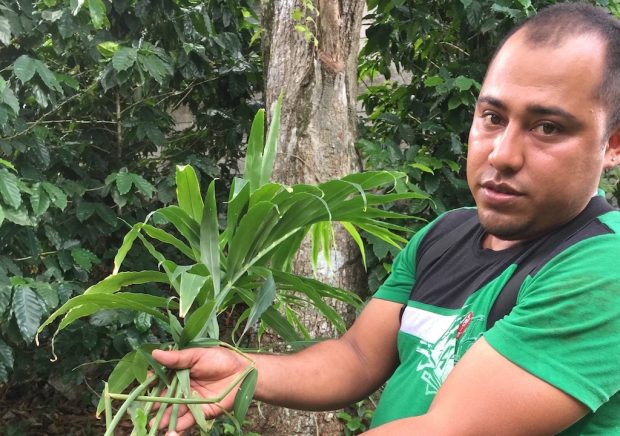 High Value and Low Risk in Adding Ginger and Turmeric in Nicaragua's 'Dry Corridor'
