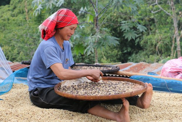From the Hills to the Valley: Lanna Coffee Company Works for Improvement