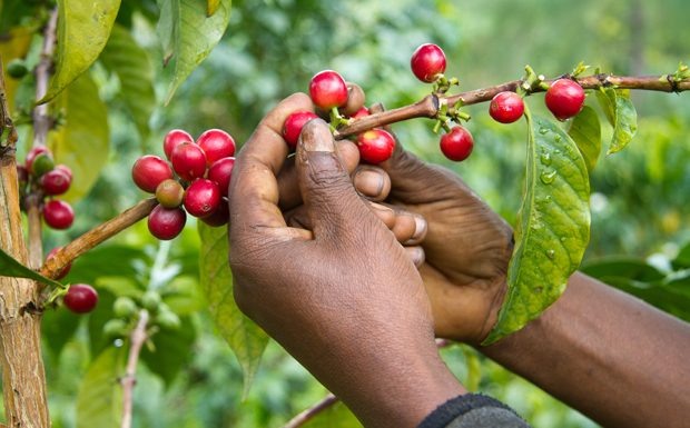 TechnoServe Names Paul Stewart Global Coffee Director