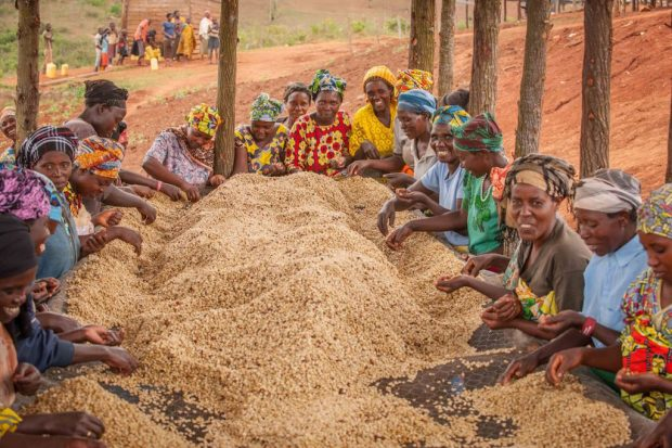 Bloomberg Philanthropies Giving $10M Toward Women-Grown Coffee Development
