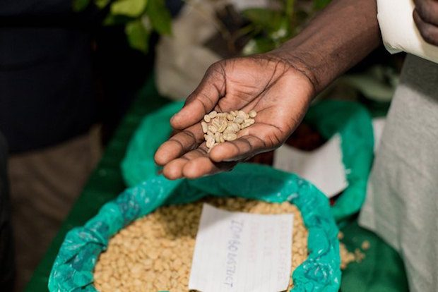 At 2nd Uganda National Coffee Festival, Stakeholders Push for Laws to Protect Quality