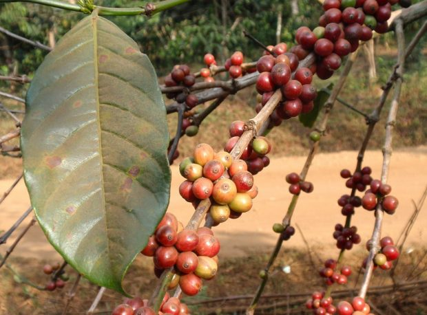 Opinion: In The US and the World, Troubling Times for Climate and Coffee