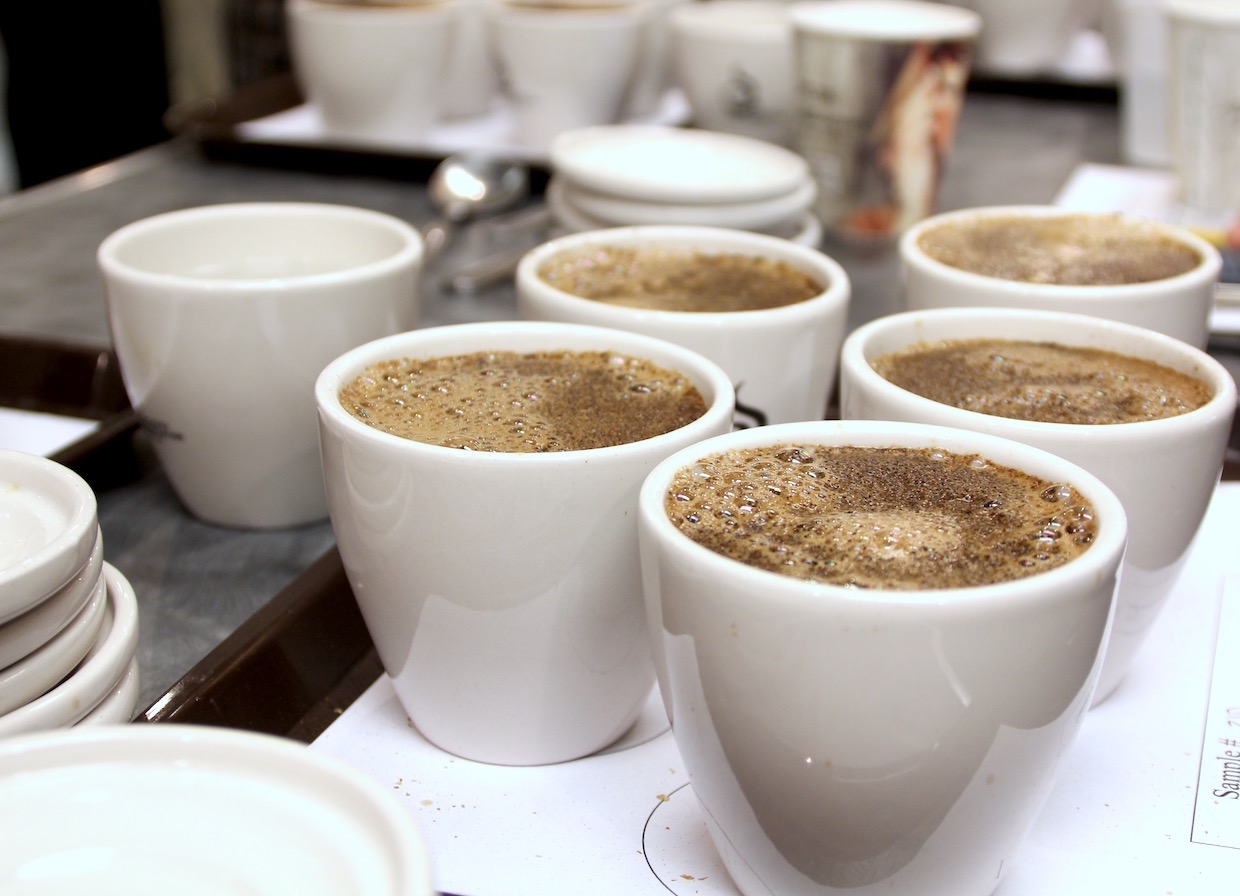 coffee cupping tasting professional