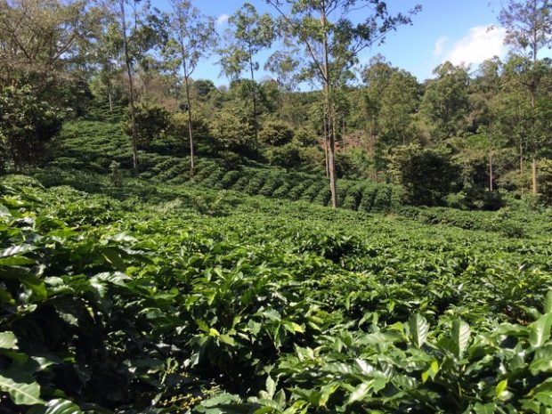 Willows Coffee Connecting Consumers and Roasters to Costa Rica