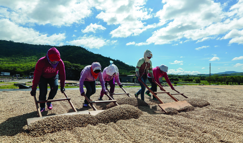 Women work on the coffee drying patios of La Providencia coffee processing facility, owned by Finca La Revancha.