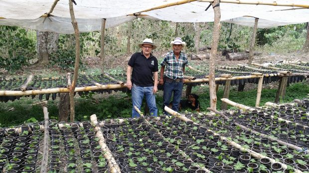 New Rust-Resistant Hybrid Centroamericano Scores 90+ at Nicaragua CoE