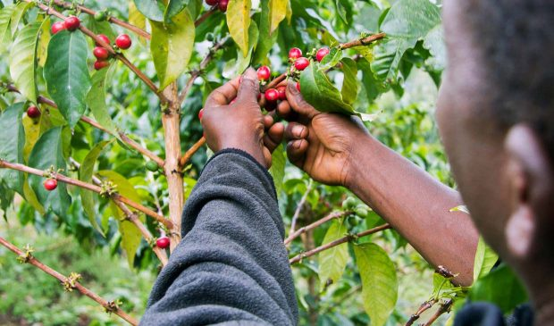 Technoserve Boasts of Lasting Impact in East Africa Coffee Initiative