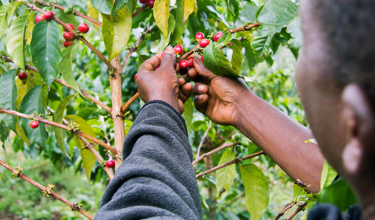 Photo via Technoserve Coffee Initiative website, Nile Sprague