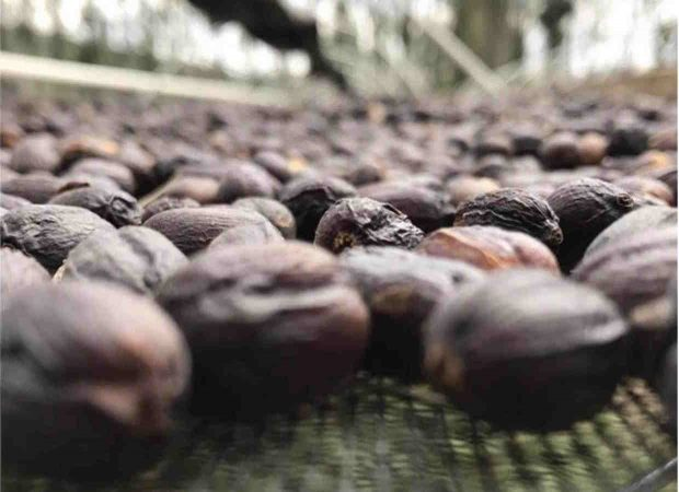 Processing Variations Drive Record-High Prices at Guatemala Cup of Excellence Auction
