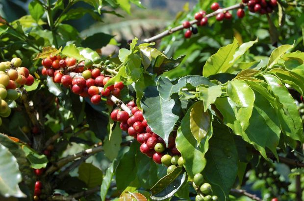 Thoughts On The UTZ And Rainforest Alliance Merger