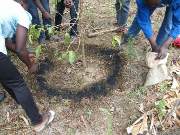 Low-Cost Biochar Application in Tanzania Shows Astounding Increases