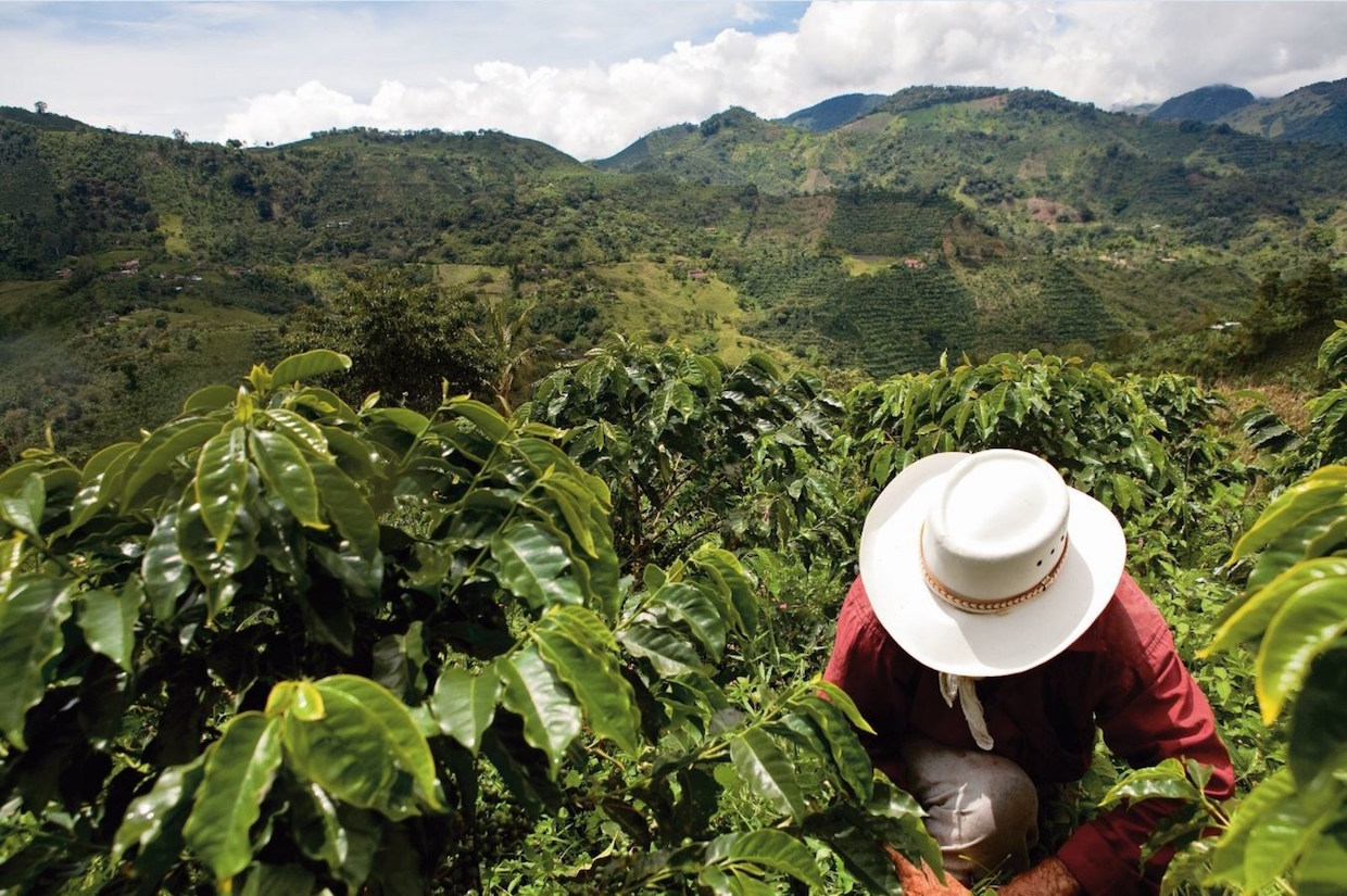 coffee colombia post-conflict