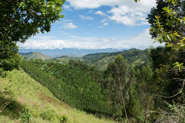 Let's Talk Coffee 2018 Heading to Huila, Colombia