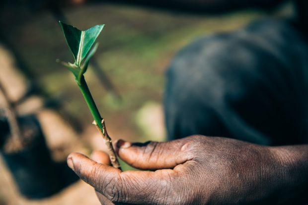 Coffee&Climate Launches Free Toolbox for Coffee Farmers Facing Climate Change