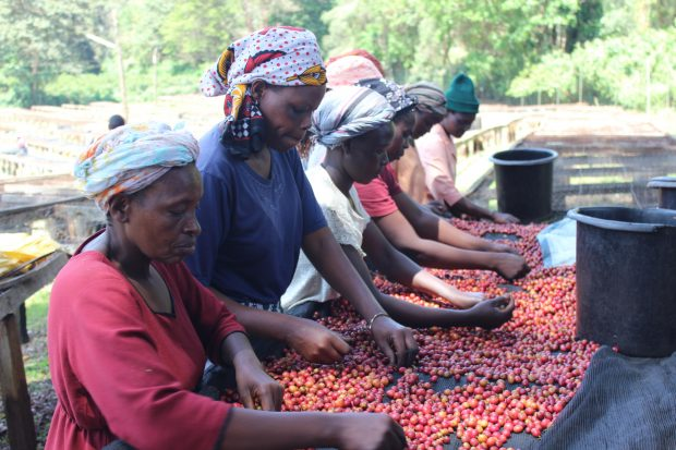 Supporting the Coffee Industry Requires Supporting Women