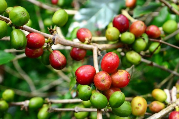 Things I'll Never Do Again (Or, My Failures in Coffee Sustainability)