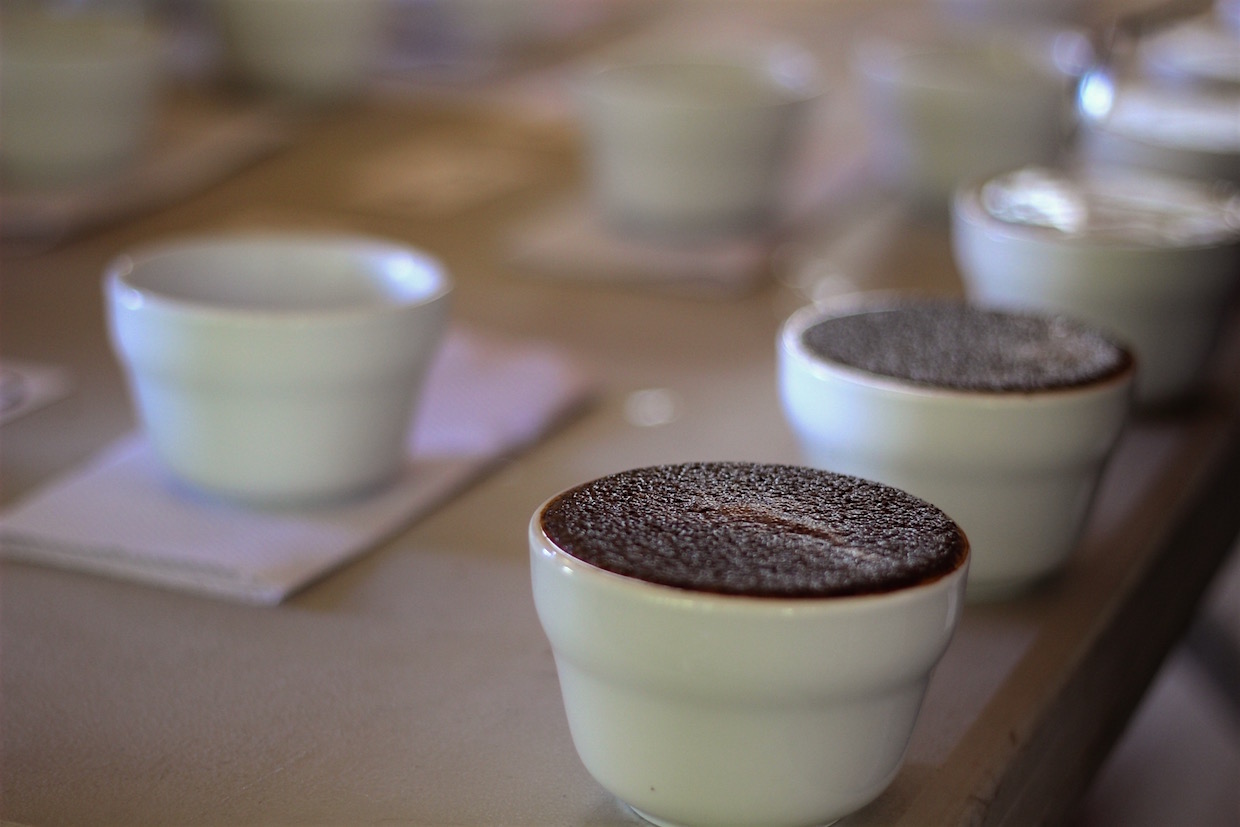 Guatemala Cup of Excellence green coffee cupping