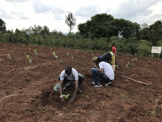 Rwanda Coffee Breeding Hub Opens to Benefit Production Throughout Africa