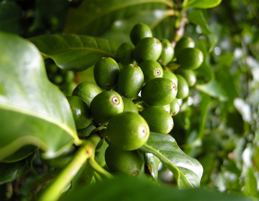 coffee sustainability