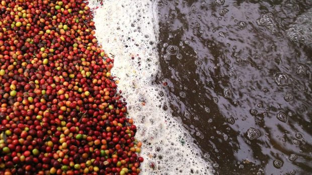 The Biggest Coffee Sustainability News of 2018