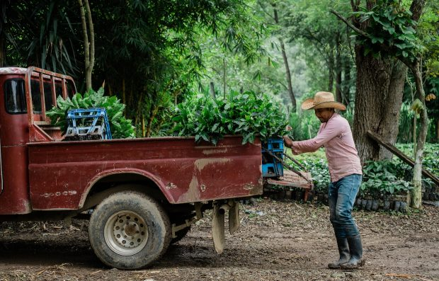 Calls and Responses: The Top News on Coffee Prices in 2018
