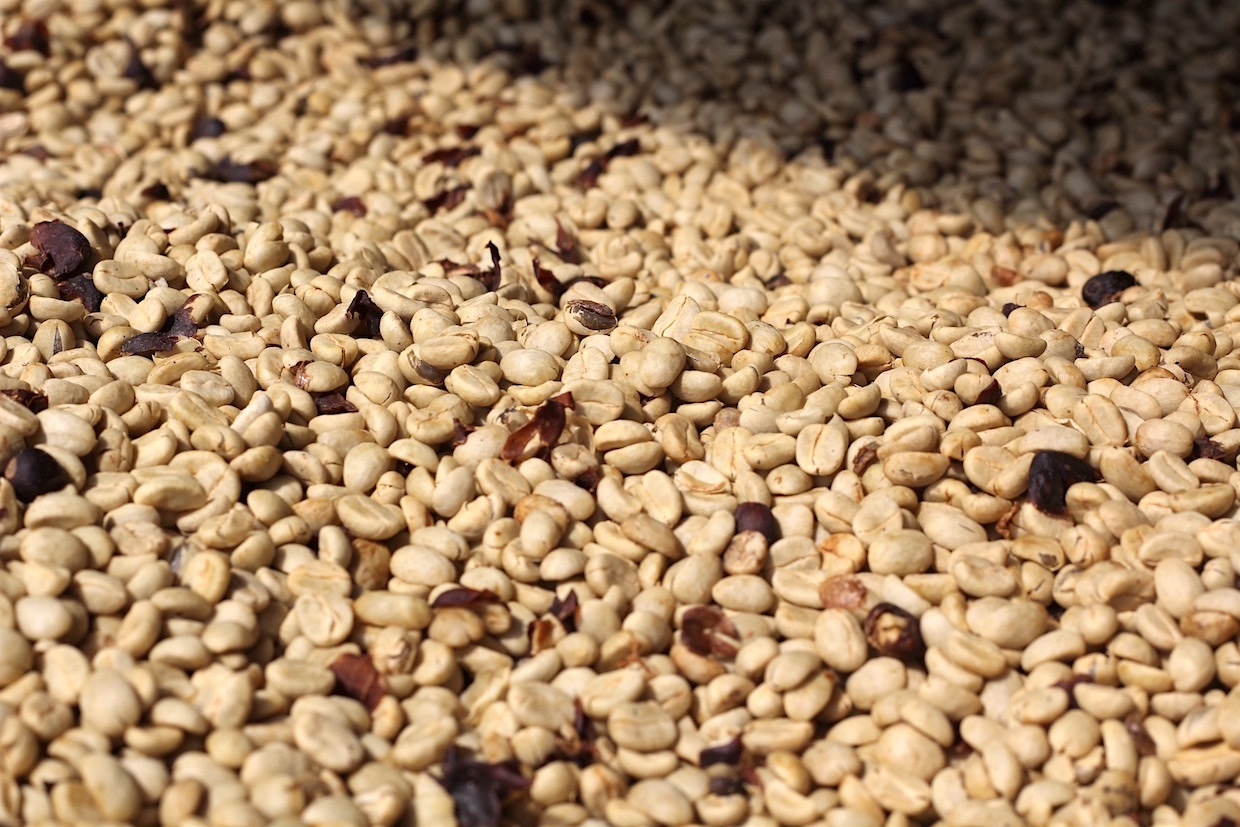 coffee drying in parchment