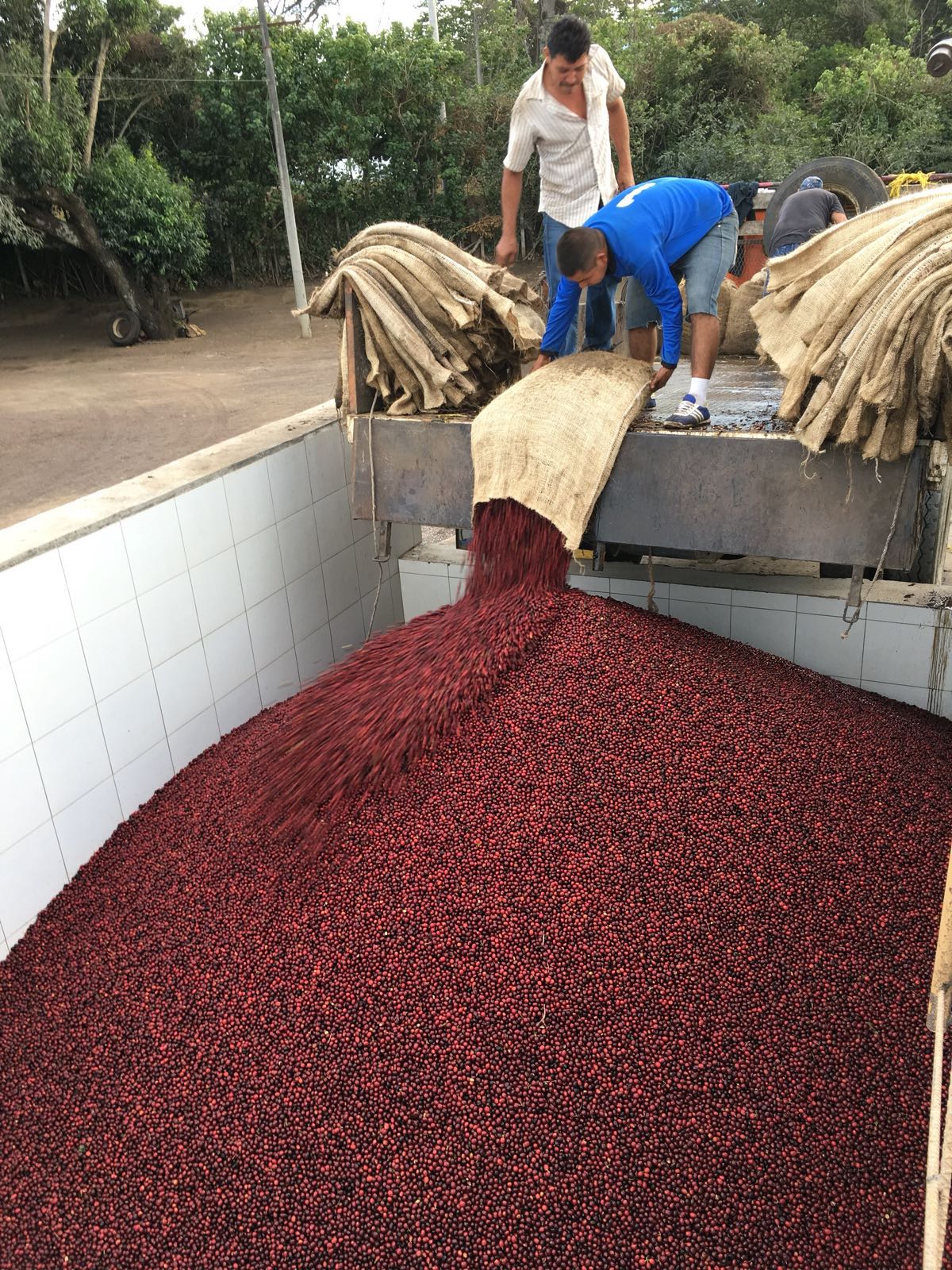 Coffee Cherry Delivery