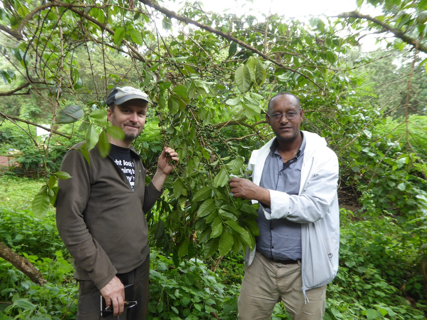 Coffee-growing-in-the-Harenna-Forest-in-Ethiopia.-Dr-Aaron-Davis-and-Techane-Gonfa.-Image-RBG-Kew.-1376×1032